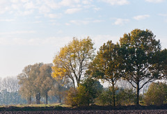 Bomen in de herfst - Dutch trees in autumn sunlight (RuudMorijn) Tags: road wood november blue autumn trees light red sky orange brown sun sunlight plant color tree green fall texture nature netherlands colors dutch field grass leaves sunshine yellow rural forest season landscape outdoors gold golden design countryside maple bomen woods flora october scenery colorful branch seasons view natural bright outdoor path vibrant decorative bare seasonal herfst perspective scenic vivid peaceful sunny scene fresh foliage vegetation environment layers serene picturesque tranquil autumnal kleurrijk kaal northbrabant drimmelen