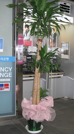 airport-tree