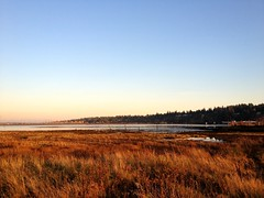 Evening at Blackie Spit (Shore Birder) Tags: sunset beach vancouver crescent boundarybay blackiespit southsurrey