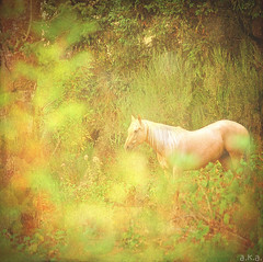 Horse Whispers (akaadventurephotos) Tags: top tag photographers ie motat brigettes awardtree tatot artistictreasurechest photographymypassion magicunicornverybest sbfmasterpiece sbfgrandmaster