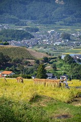 Spectacle of terraced paddy fields.
