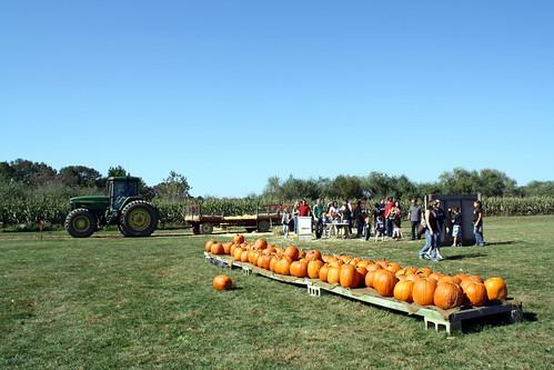 [281/365] Pumpkin Picking by goaliej54