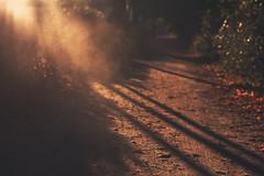 silhouette sunset (untiefen) Tags: autumn sunset leaves sonnenuntergang herbst silhouettes dust staub warmtones herbstlich