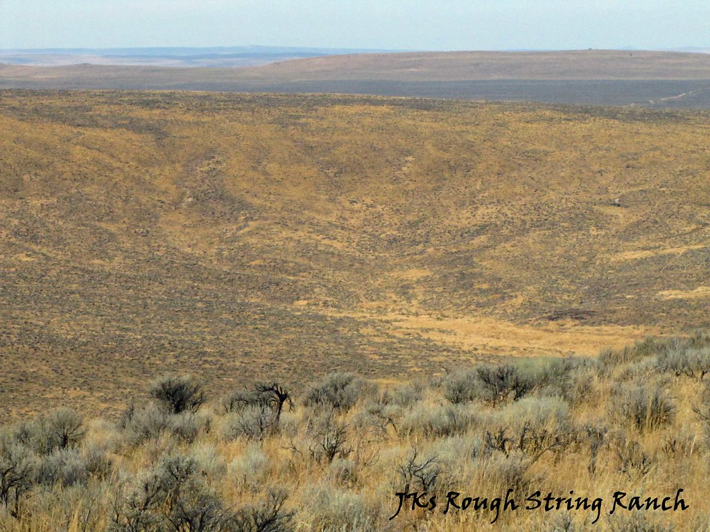 On the Sagebrush Sea