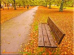 Cringle Park (Muzammil (Moz)) Tags: autumn fall manchester moz cringlepark muzammilhussain
