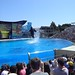 Sea World with SYR - 043
