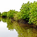 Mangroves-15