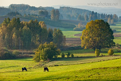 Bucolic (Slawek Staszczuk) Tags: wood morning autumn trees mist green grass misty rural forest woodland landscape haze colours poland hills foliage textures telephoto fields layers colourful hazy hilly autumnal rolling bucolic pomerania layered longlens kaszuby pomorskie kashubia gorczyno kashubianlakedistrict ramleje kashubianswitzerland