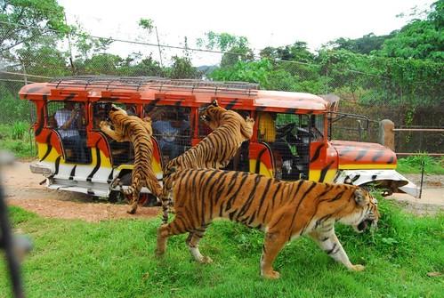 zoobic safari2