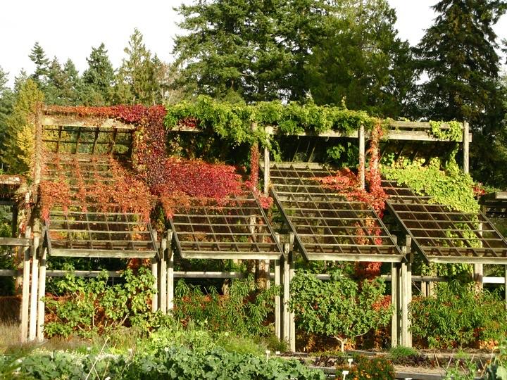 ubc botanical garden 016