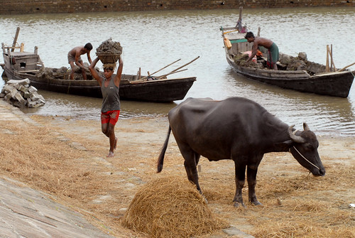 Fishermen with their catch and livestock, Bangladesh. Photo by WorldFish, 2006