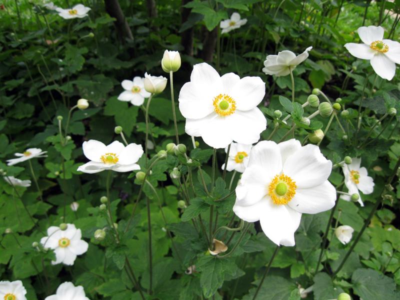 Flores brancas // White Flowers
