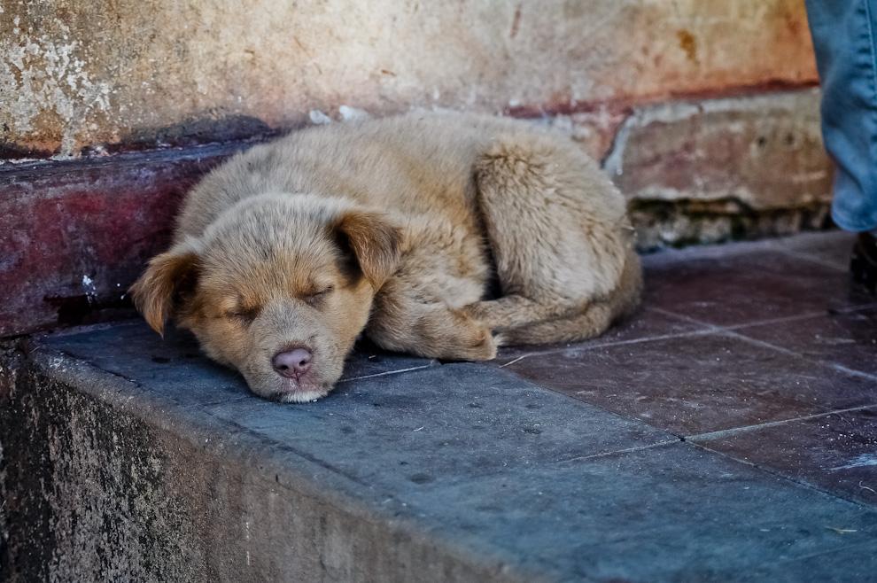 """Un cachorro duerme plácidamente en el piso del ex mercado municipal de Quiindy mientras se llevaban a cabo las preparaciones de la presentación del Libro del proyecto Vaka Pipopó """"Un pueblo en torno a las pelotas"""" el pasado 28 de Mayo del 2011 en el centro de Quiindy, departamento de Paraguarí. (Elton Núñez)"""