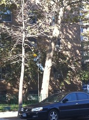 Tree Climber on Avenue A