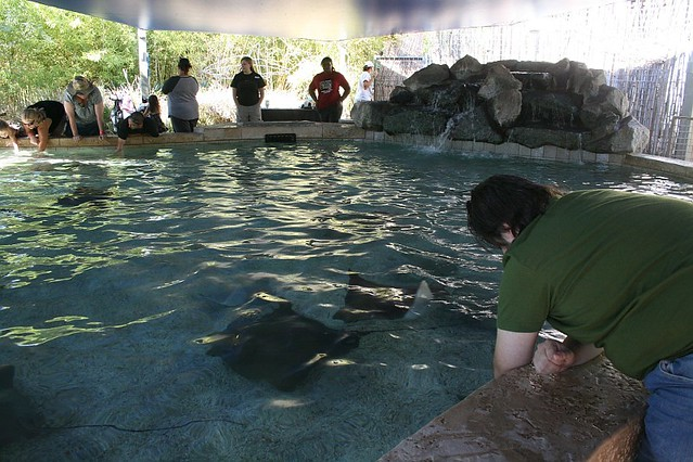 Petting stingrays