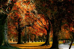 Trees (Steve-h) Tags: nature fake faked colours colors autumn autumnal fall november 2011red orange yellow green grey brown women girls females walkers recreation recreational park sun sunlight sunshine pond paath grass leaves trees ststephensgreen dublin ireland canon macro lens handheld canonef100mmf28lmacroisusm canoneos5dmk2 steveh bestcapturesaoi mygearandme mygearandmepremium mygearandmebronze mygearandmesilver mygearandmegold explore interesting last seven days doubleniceshot mygearandmeplatinum mygearandmediamond creativecommons eltringexcellence tplringexcellence dblringexcellence artistoftheyearlevel2 saariysqualitypictures pureclassgoldbandaward path paths flickrstruereflection1 flickrstruereflection2 flickrstruereflection3 flickrstruereflection4 flickrstruereflection5 canoneos5dmkii