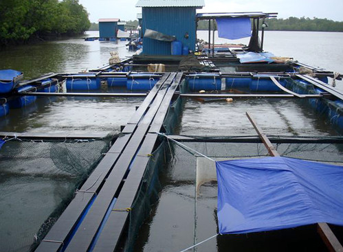 Netcages in Kuching, Malaysia. Photo by Fred Weirowsky, 2007