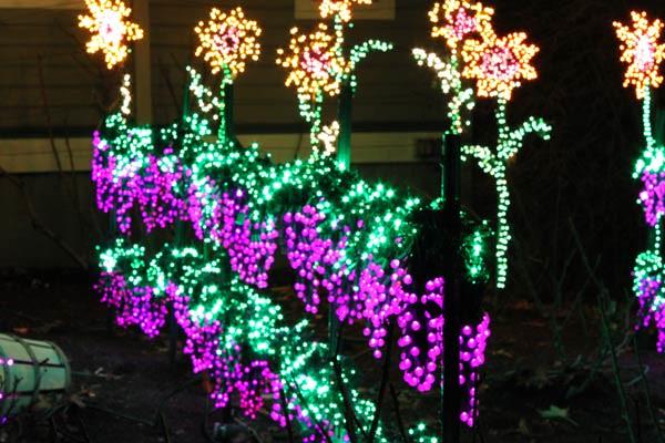 garden dlights bellevuecom - Bellevue Christmas Lights