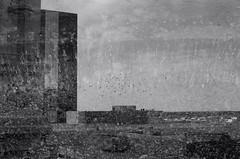 (Aperture and Aperture) Tags: blackandwhite bw slr film birds skyline cityscape pentax k1000 doubleexposure multipleexposure 50mmlens 35mm50mmlense