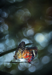 night of intimacy (twomeows (away...)) Tags: night canon butterfly bokeh f35 50d