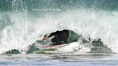 Surfer In Curl (Daryl L. Hunter - Hole Picture Photo Safaris) Tags: california surfer lososos surfing morrobay curl centralcoast breakingwave sanluisobispocounty montandeorostatepark