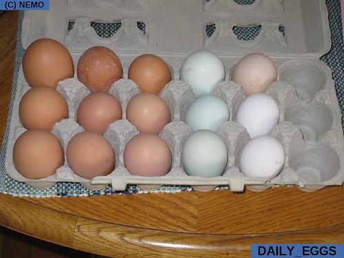 daily_eggs