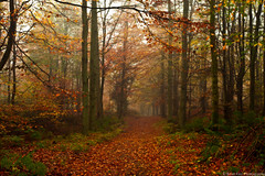 Barrhill Woods - part 2 (.Brian Kerr Photography.) Tags: autumn trees mist fog landscape scotland colours dumfriesandgalloway kirkcudbright barrhillwoods