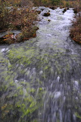 Pearl Shoal  (MelindaChan ^..^) Tags: china plant tree nature water natural running mel pearl sichuan jiuzhaigou  shoal   pearlshoal chanmelmel melindachan mlelinda