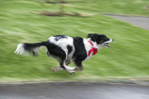 Run Muu Run by katz.*