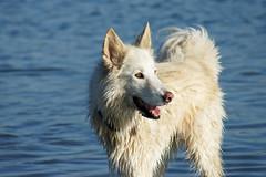 Tunny (Cyn Reynolds) Tags: blue rescue dog sandiego tripod 2011 a550 elementsorganizer