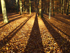 Big shadows in the autumn forest (Habub3) Tags: wood travel autumn light shadow holiday plant tree art fall nature leaves lines forest canon germany deutschland licht buchenwald interestingness search interesting reisen flora europa europe stuttgart urlaub herbst natur pflanzen explore blatt wald schatt