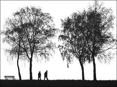 Lonely days (RainerSchuetz) Tags: people tree silhouette bench highkey parkbench birchtree abigfave blinkagain bestofblinkwinners blinkagainsuperstars
