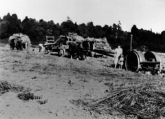 McCleery farm, haying