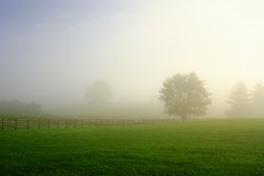 Mist (trek22 (on the road...)) Tags: morning autumn mist tree fall misty fog sunrise canon pennsylvania farm 7d westchester beautifulcapture trek22  artistoftheyearlevel2 canonimagination