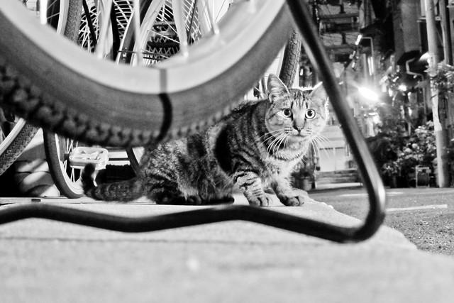Today's Cat@2011-11-16