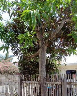 6350594940 c2bbac9dc4 Ecuador Property Rentals