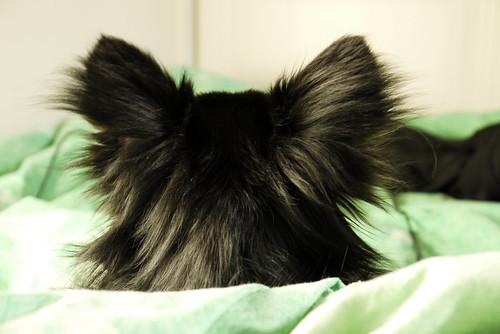 The back of my dog's head by maximegomez