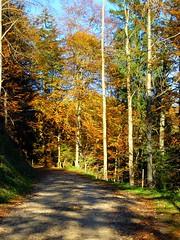 Waldherbstweg (ponte1112) Tags: trees forest geotagged schweiz suisse hiking s5100 coolpix che loch wandern weg forst kantonzrich capturenx switzzerland gibswilried geo:lat=4730590607 geo:lon=894439458