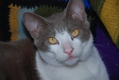 Stucco Buckner (Joyce-Tex-Buckner) Tags: cats eyes whiskers paws theplantman michaelbuckner