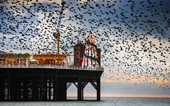 Starlings over Brighton Pier - BEST VIEWED LARGE (Alan MacKenzie) Tags: sea nature birds sussex pier brighton wildlife flock migration starlings brightonpier murmuration alanmackenzie