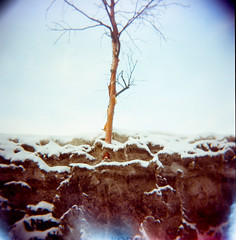 00260006.jpg (lauritadianita) Tags: winter snow cold tree alaska landscape march holga cityscape snowy 120film anchorage emerging snowscape birchtree 400iso portranc
