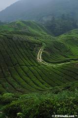 Sg Palas Tea Plantation (Unedited) (2121studio) Tags: nature nikon ali malaysia indah cameronhighlands kuantan alam malaysianphotographer drali sgpalasteaplantation 2121studio kuantanphotographer pahangphotographer ciptaanallahswt 0139342121 nubleebinshamsubahar