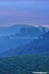 Magic Hour @ Sg Palas (2121studio) Tags: nature sunrise dawn nikon ali malaysia indah cameronhighlands kuantan alam malaysianphotographer drali sgpalasteaplantation 2121studio kuantanphotographer pahangphotographer ciptaanallahswt 0139342121 nubleebinshamsubahar