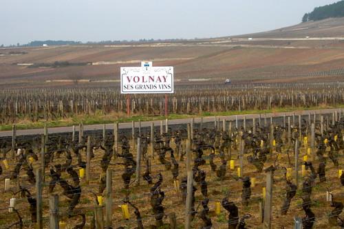 vonay vine
