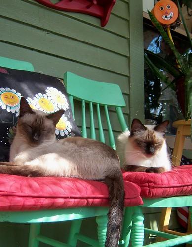 kitties in the sunshine