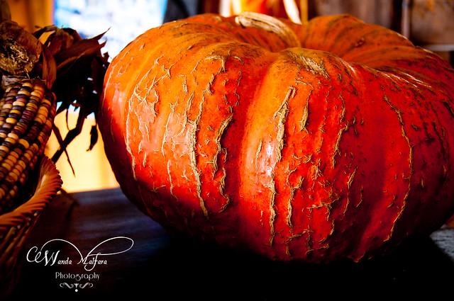 Pumpkins 130
