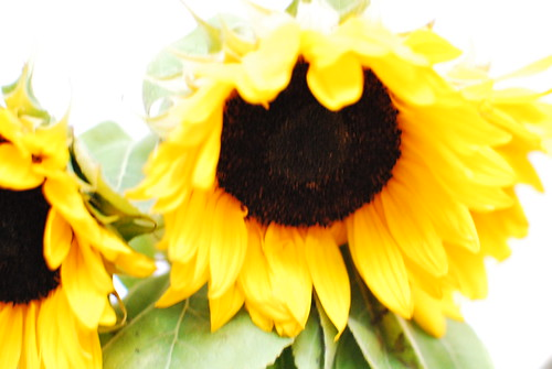 10 on 10: Sunflowers
