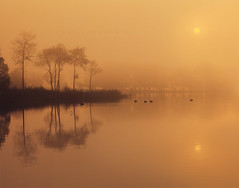 The quintessential quacking quintet. (Stuart Stevenson) Tags: uk trees sun mist sunrise reeds photography scotl