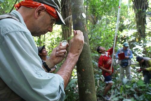 ARS scientist Gary Samuels extracts a sample of living plant tissue from a wild cacao tree on the bank of Rio Marañón en Peru. (Photo courtesy of ARS)