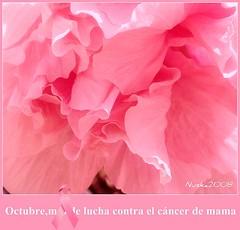 Lucha contra el cáncer de mama (nuska2008) Tags: pink flowers naturaleza flores flickr rosa cáncer natureplus flowersarebeautiful olympusu1060s1060 nuska2008 pinkribbonsforawareness nanebotas luchacontraencáncerdemama